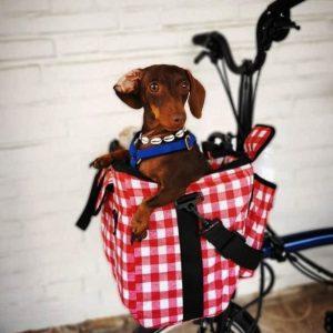 Valerias Dog Bag for the Brompton Bike