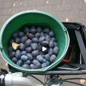 Brompton Faltrad transport